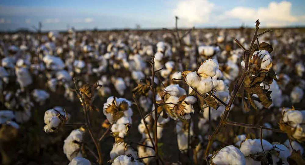 Supreme Court Holds Monsanto's Patent On GM Cotton Seeds Valid
